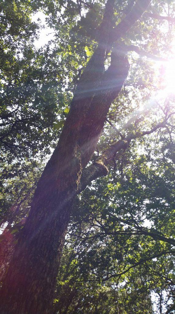 01-tree-contact