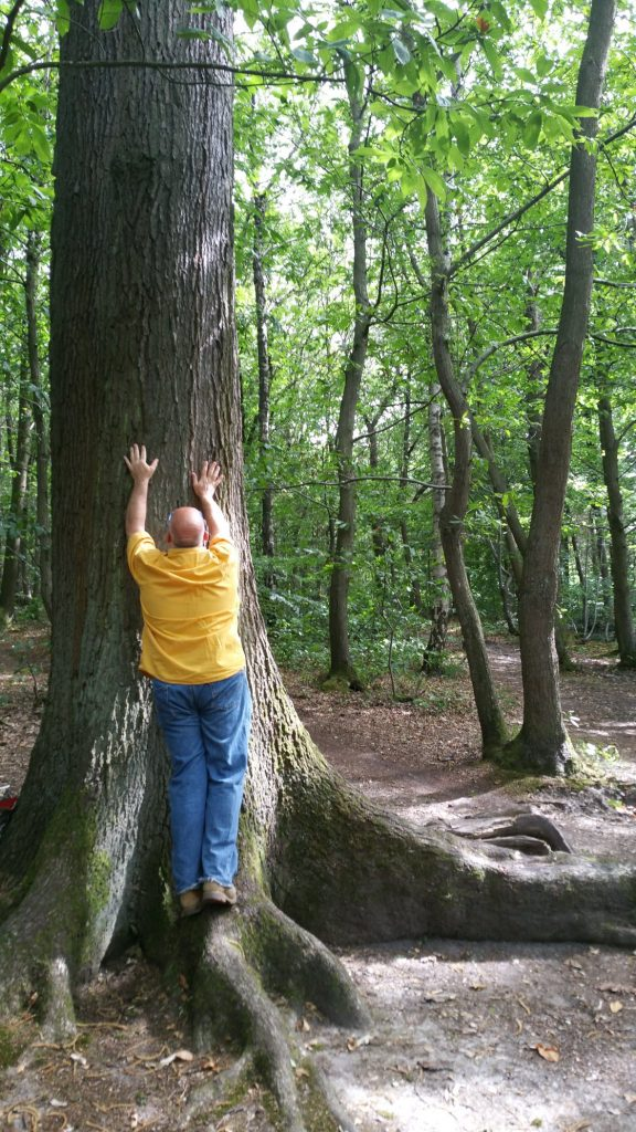 13-tree-contact-1