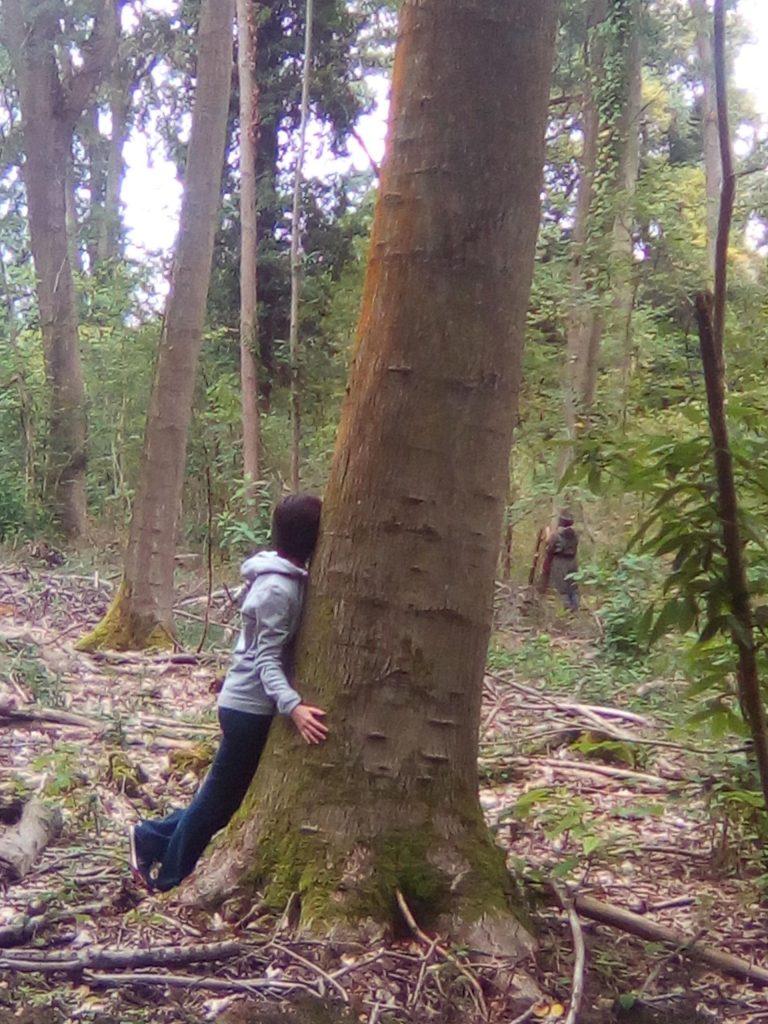 17-tree-contactr
