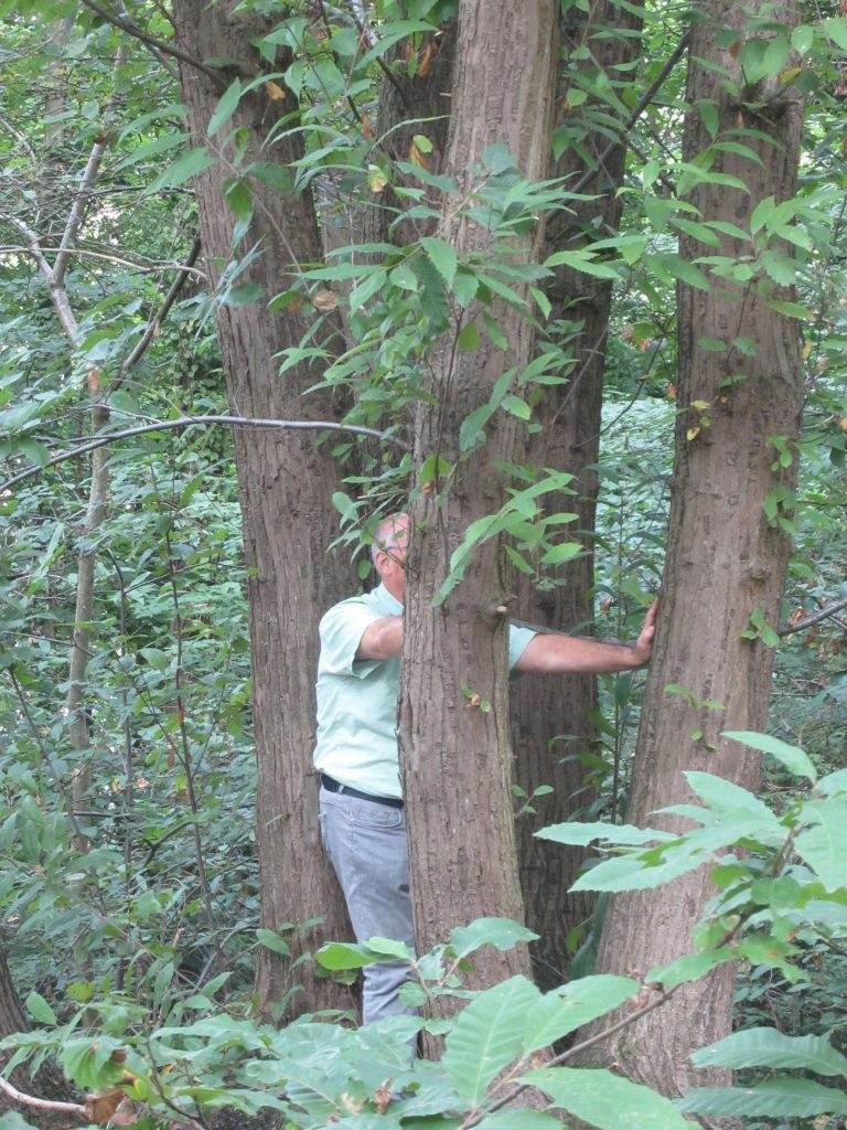 23-tree-contactr