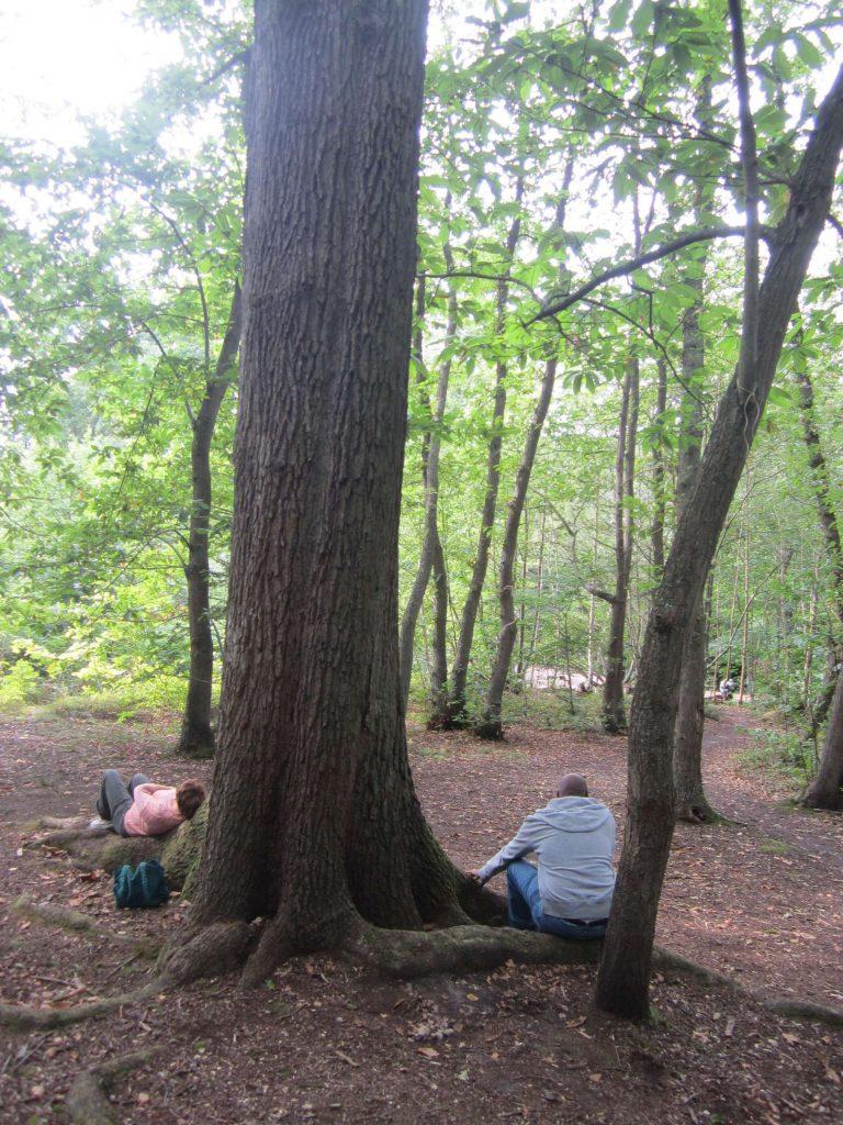 24-tree-contact